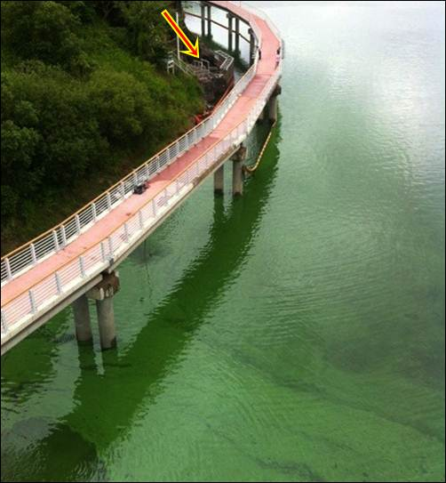 아름다움 사라진 낙동강엔 녹색물만 가득 흐르고... 본포교에서 바라본 낙동강입니다. 똑같은 위치에서 바로 아래를 내려다 본 낙동강입니다. 모래톱은 사라지고 자전거도로가 새로 생겼습니다. 그러나 낙동강은 온통 녹조 천국이 되었습니다. 에메랄드빛 녹색 물결 위를 달리는 자전거도로 환상적이지 않습니까?