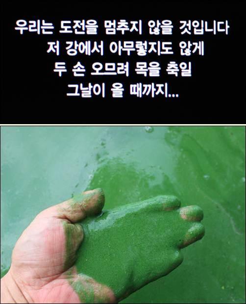 강물을 손으로 퍼서 드시겠다는 가카의 4대강 홍보영상(사진 위). 그렇습니다. 22조 원을 쏟아부어 만든 낙동강 녹즙을 이 대통령께 마음껏 드시라고 마구 퍼 드리고 싶습니다.