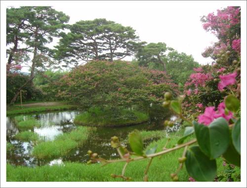배롱나무와 소나무 세한연후에야 소나무의 푸름을 알 듯, 한여름이 돼서야 배롱나무의 붉음을 안다