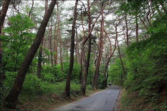 다솔사로 가는 길은 솔숲이 울창하다. 마치 소나무 군사의 호위를 받으며 산사로 오르는 기분이다.