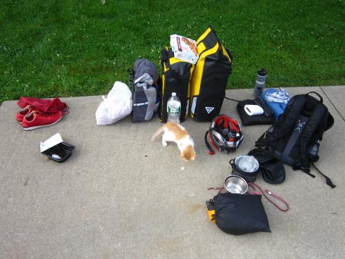 여행자의 짐 바닥에 풀어놓은 짐 사이를 고양이가 돌아다니고 있다.