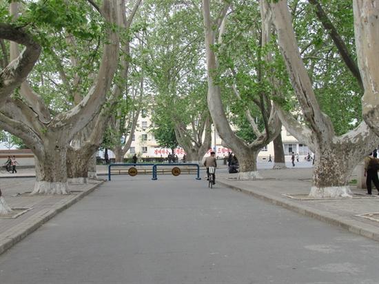 고목나무 거리