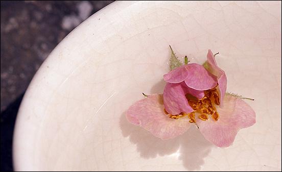 제철에 나는 꽃 한송이 동동 띄워 마시는 걸 좋아하는 사람도 있습니다.