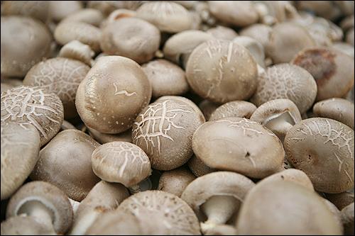 표고버섯 항암 효과가 뛰어나다는 표고버섯