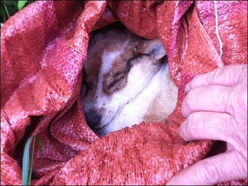 """한 주민은 """"헬기소음 탓에 집에서 기르던 개가 쇼크사해버렸다""""고 주장하며 강아지를 보여주었다."""