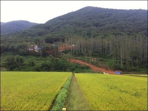 민가와 가장 가까운 23호기 송전탑 민가와도 가장 가깝고 바로 인근에 논이 있다.