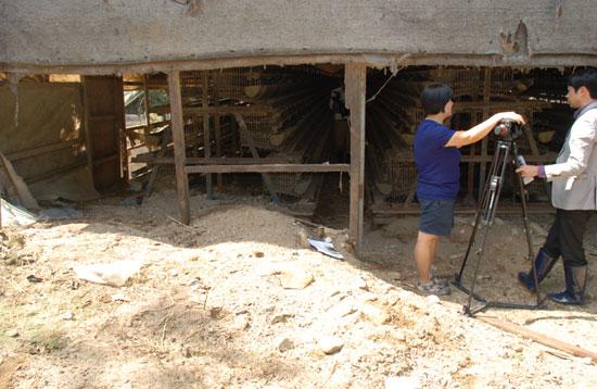 상류에서 쓸려 내린 토사가 양계장을 덮친 가운데 닭들은 옮겼지만, 복구에는 손길이 미치지 못한 채 양계운영자의 가슴만 태우고 있다.