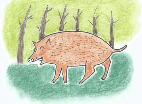 멧돼지는 무서운 외모와는 달리 겁이 많은 동물입니다.