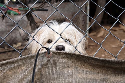 사설보호소내의 유기동물들은 사육밀도가 매우 높은 한정된 공간에 갇혀 불규칙하게 지원되는 사료에 의존하고 있다.