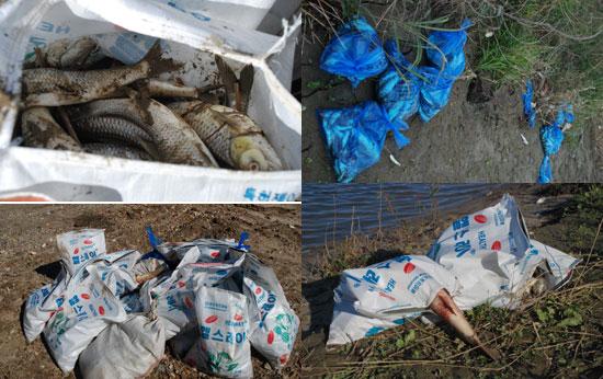 23일 오전 12시까지 수거된 물고기는 60여 포 정도다.
