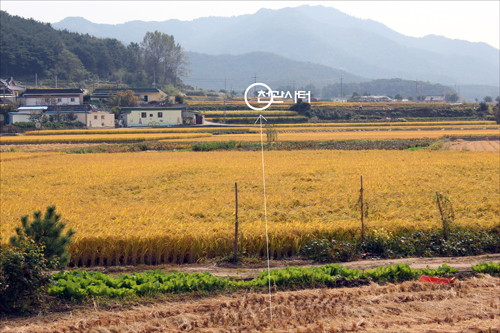 김유신 집터에서 바라보는 천관사터 쪽의 풍경