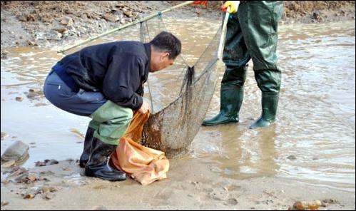 [2010년 3월] 금강정비사업이 한창이던 당시 충남 공주시 웅진동 금강보 건설 현장에서 공사 인부들이 물웅덩이에 갇혀 있던 물고기를 잡아 본류로 옮기고 있다.