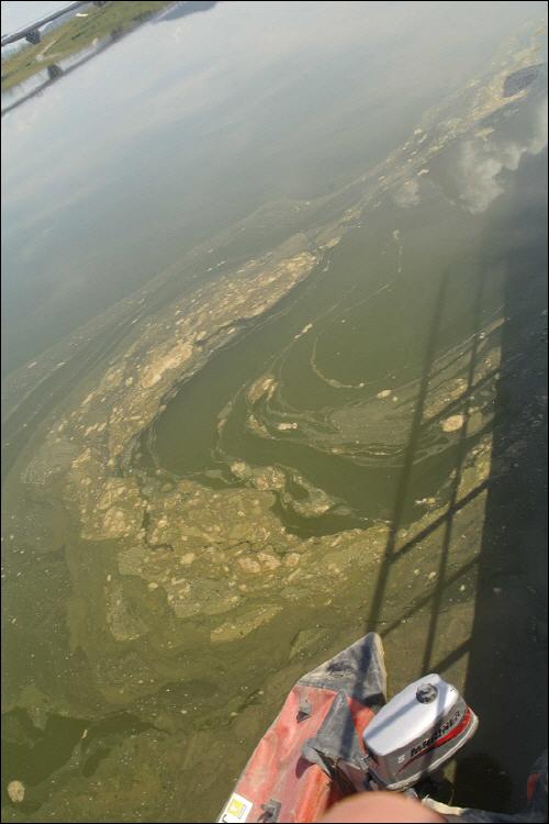 [2011년 가을] 세종보 소수력발전소 근처에 육안으로 가늠할 정도로 많은 양의 녹조가 펼쳐져 있다.