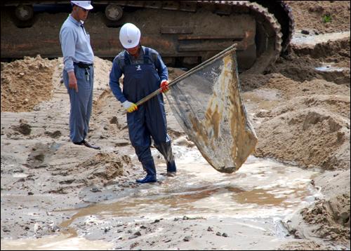[2010년 5월] 공주 금강보 부근 공사 현장이 물속에 잠겼다가 빠지면서 수많은 물고기가 웅덩이에 갇혀 집단 폐사했다. 공사인부들이 일부 갇힌 물고기를 옮기고 있다.
