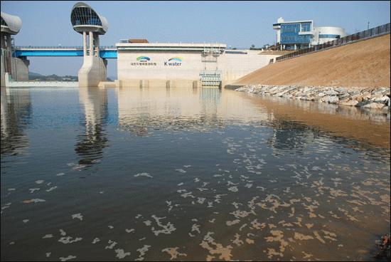 [2012년 여름] 물고기 떼죽음은 이미 오래 전부터 우려돼 왔다. 지난 여름 부여 백제보 앞, 심한 악취를 풍기고 있다.