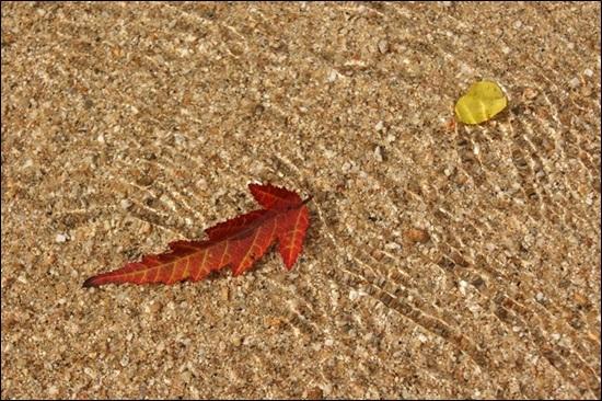 모래와 강물과 햇살이 빚은 내성천의 작품.