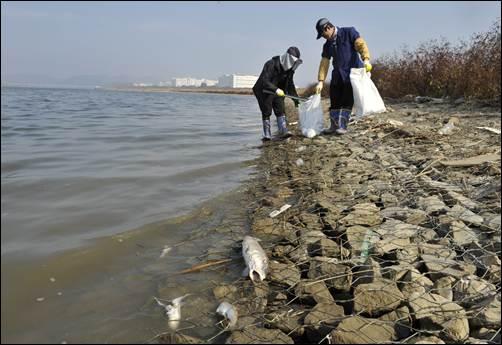 이명박 대통령이 살려 놓았다는 낙동강과 금강에서 물고기가 떼죽음 당했습니다. 그런데 4대강 사업의 동업자인 새누리당은 지금까지 침묵입니다.
