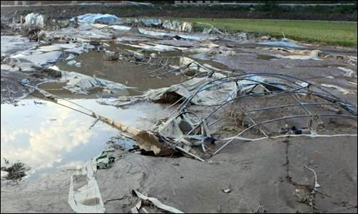 제방 붕괴로 농경지가 침수되는 재앙이 발생했습니다.