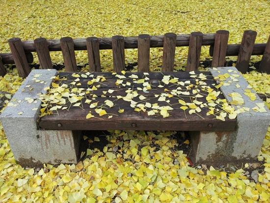 사색의 벤치 밴치에 떨어진 은행잎이 사색의 공간을 만들었다.