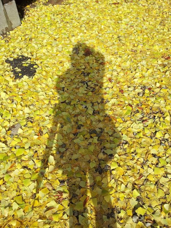 가을속에 물들다. 촬영을 하다가 쌓여 있는 은행잎이 너무 고와 나를 묻어 보았다.
