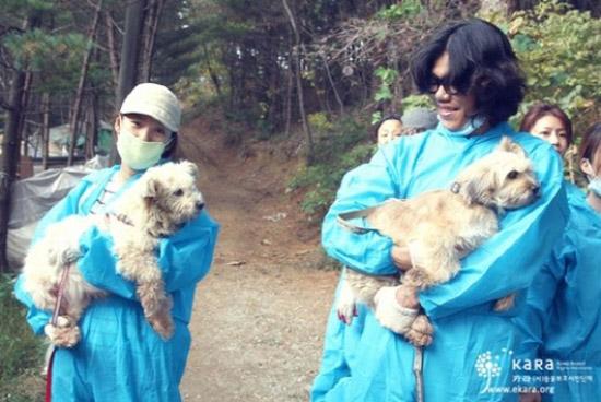 동물보호시민단체 카라(KARA)는 지난 10월 홈페이지에 이효리와 이상순의 유기견 보호소 봉사활동 모습을 공개했다.