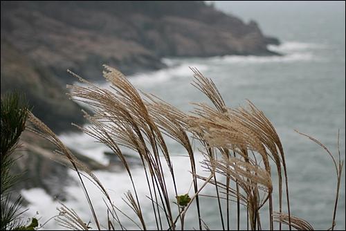 억새와 어울린 바다 풍경