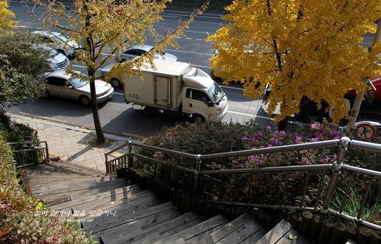 만추에 핀 철쭉9 늦 가을 만추에 도시에서 피어난 철쭉무리들