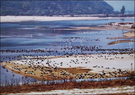 4대강사업 전의 해평습지의 모습.  모래톱과 얕은 강물의 낙동강 해평습지. 그야말로 철새들의 낙원이었다.