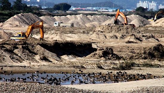 지난 겨울 당신들이 한 짓을 알고 있다 2010년 겨울, 모래의 강이자 철새들의 낙원, 낙동강 해평습지를 작살을 내고 있는 모습이다. 그 가운데서 쇠기러기들이 위태롭게 쉬고 있는 모습이 너무 안쓰럽다.