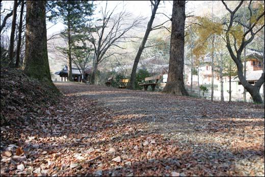 불회사로 가는 숲길. 낙엽이 수북하게 쌓여 고즈넉한 분위기를 연출하고 있다.