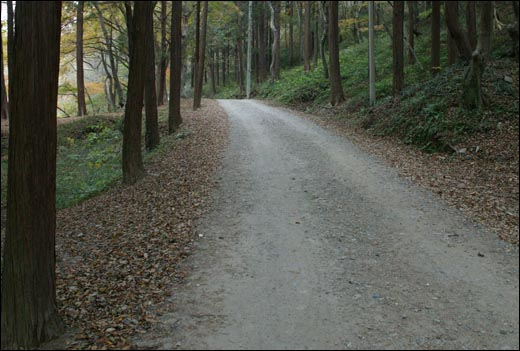 불회사로 가는 길. 삼나무와 편백나무, 비자나무 빽빽한 숲길이다.