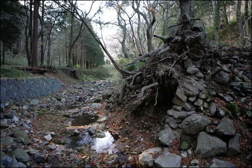 불회사 계곡. 뿌리를 드러낸 나무가 색다른 풍경을 연출하고 있다.