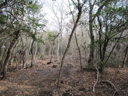 쫄븐갑마장길 시작점의 숲길