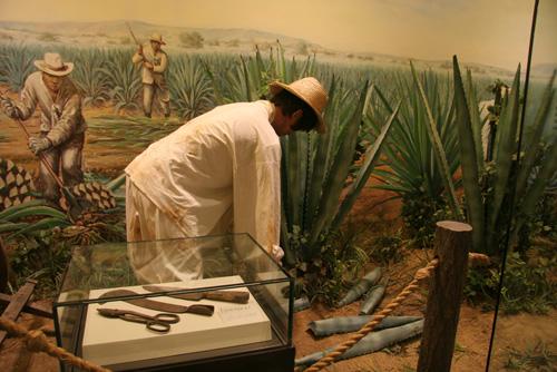 멕시코 에네켄 농장에서 일하는 모습을 재현해 놓은 곳.