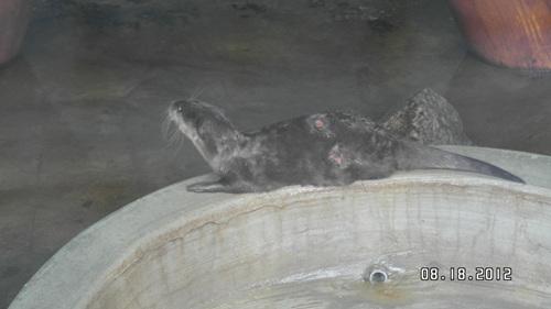 동물원에 있는 동물은 법적 관리와 조치의 대상조차 아니다.