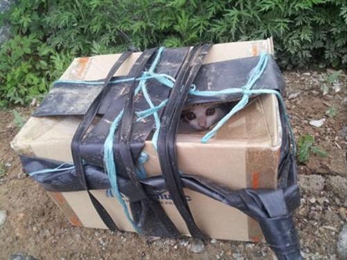 상자에 넣은 채 버려진 고양이, 트위터를 통해 사연이 알려지면서 결국 이 고양이들은 입양을 갔다.