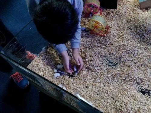동물을 함부로 만지고 가지고 놀 수 있다는 인식은 아이들에게 매우 위험하다. 동물도 존중받아야 할 존재라는 인식을 심어줄 필요가 있다.