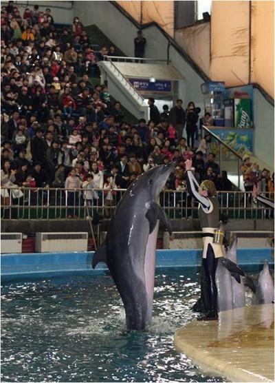 2012년 3월 12일 서울대공원에서 마지막 공연을 하고 있는 남방큰돌고래 제돌이. 박원순 시장은 제돌이의 불법 포획 사실이 알려지자 '재판 결과에 상관없이 바다로 돌려보내겠다'고 약속했다. 제돌이는 6월쯤이면 자유의 몸이 된다.