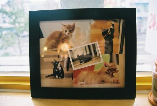자갈치 시장 근처의 한 카페에서. 카페에서 기르는 고양이 사진.