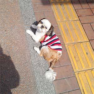 인도위의 강아지 강아지가 따뜻한 볕을 즐기고 있다.