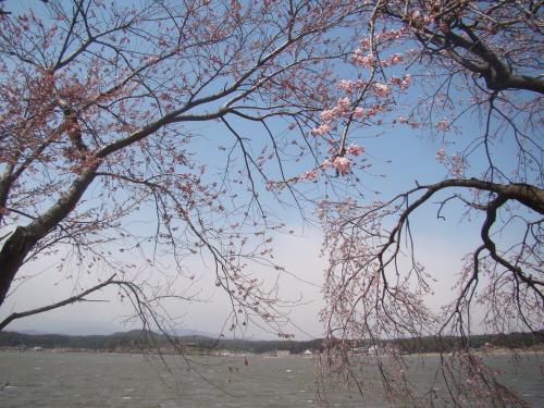 수양벚꽃이 피기 시작한 경포호숫가. 저 멀리 호수 건너편에 보이는 정자가 관동팔경 제 1경인 경포대이다.