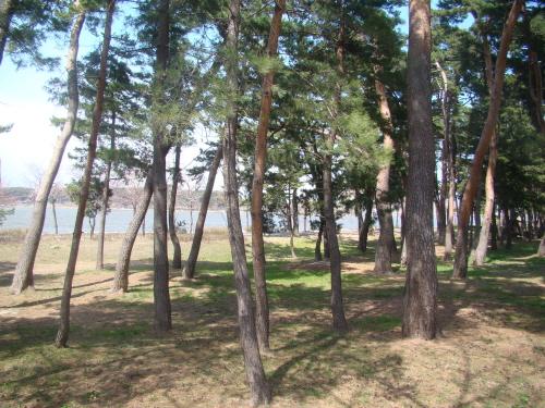 경포호를 바라보며 걷는 강릉 '초당마을숲' 산책길