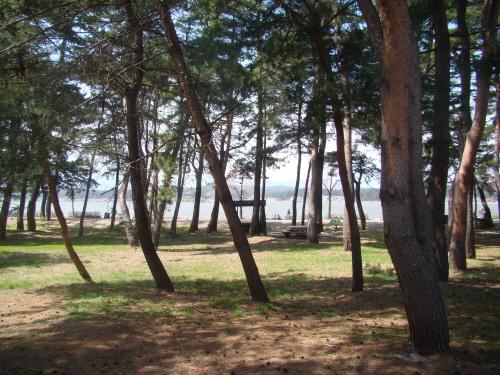 강릉 '초당마을숲' 곳곳에는 돗자리를 깔기 좋은 풀밭과 벤치, 나무 테이블이 놓여 있다.