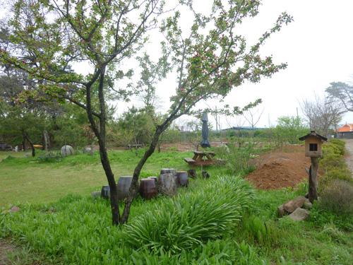 5월 중순이면 활짝 피어서 집을 환히 밝혀주는 꽃사과나무. 혼자 보기에 아까워서 이웃들을 부르기도 한다.