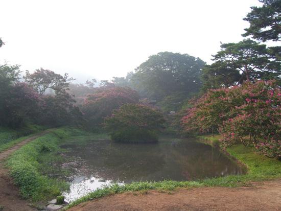 명옥헌 배롱나무꽃이 만발한 8월초 명옥헌