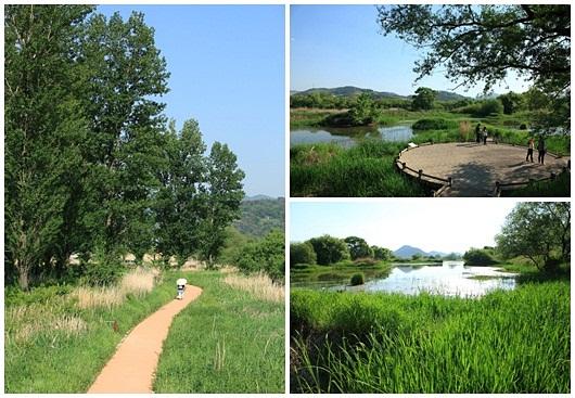 화포천은 국토해양부가 선정한 '한국의 아름다운 100대 하천' 중 하나다. 21.2km에 달하는 우리나라 최대의 하천형 습지다. 사진 왼쪽의 미루나무가 인상적이다.