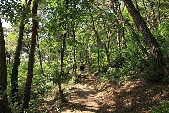 봉화산 숲길은 대통령이 손님이 오면 늘 함께 거닐었던 길이다.