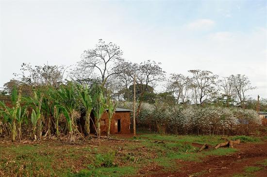 왼쪽엔 폴스바나나 오른쪽엔 커피나무를 키우고 있는 집.