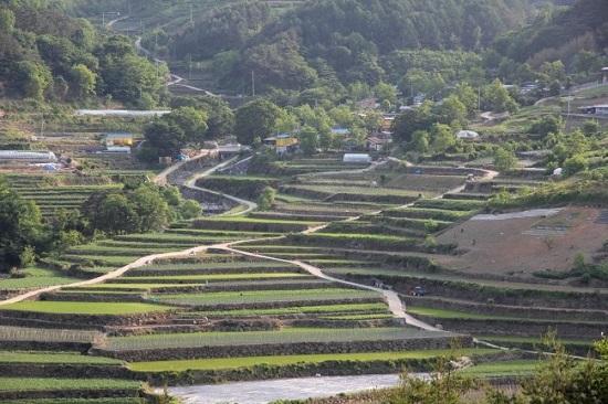 다랑논과 산골마을 공사현장과 마주보고 있는 도마마을과 다랑논