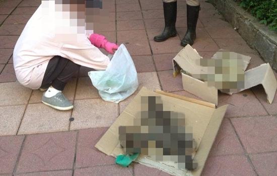 지난 3월 서울 강남구 압구정동의 A아파트 지하실에서 고양이 사체가 발견됐다. 일부 주민들이 고양이가 있는 지하실문을 임의로 잠근 것으로 확인됐다.
